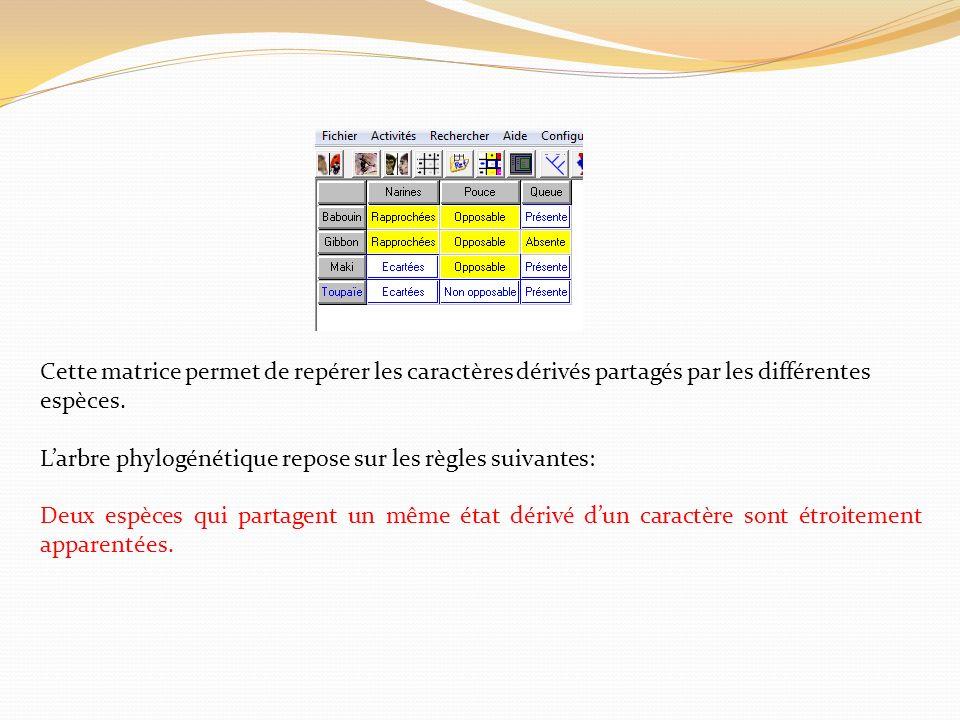Cette matrice permet de repérer les caractères dérivés partagés par les différentes espèces.