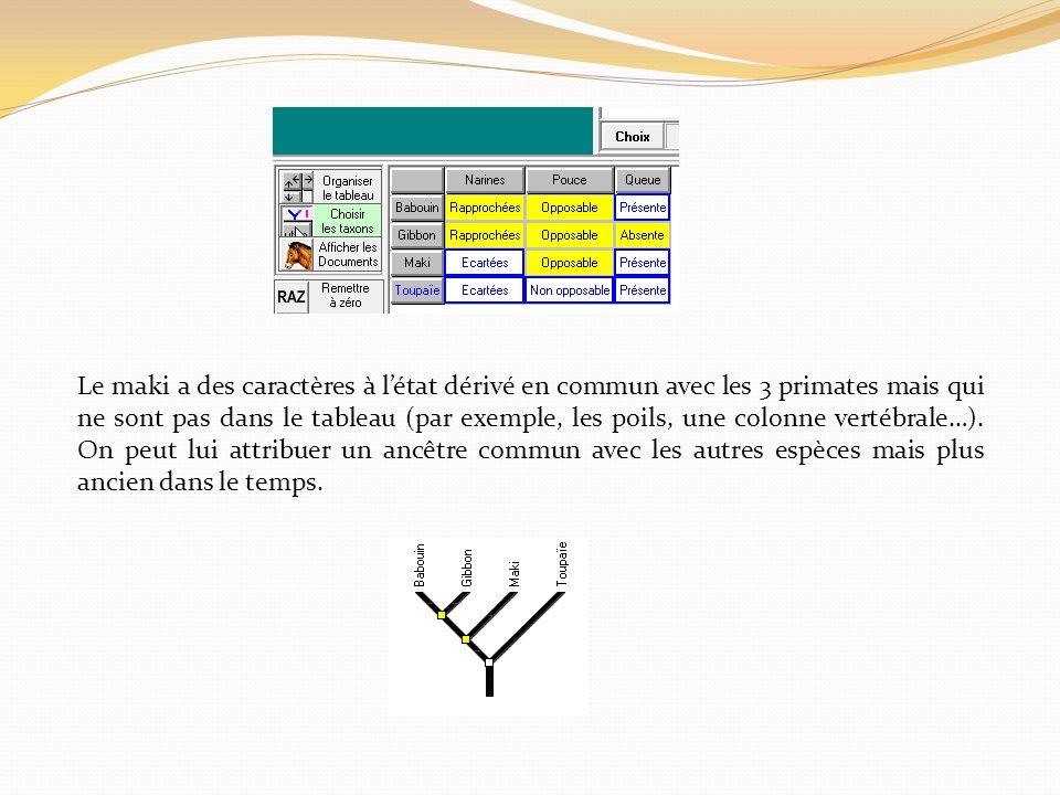 Le maki a des caractères à l'état dérivé en commun avec les 3 primates mais qui ne sont pas dans le tableau (par exemple, les poils, une colonne vertébrale…).