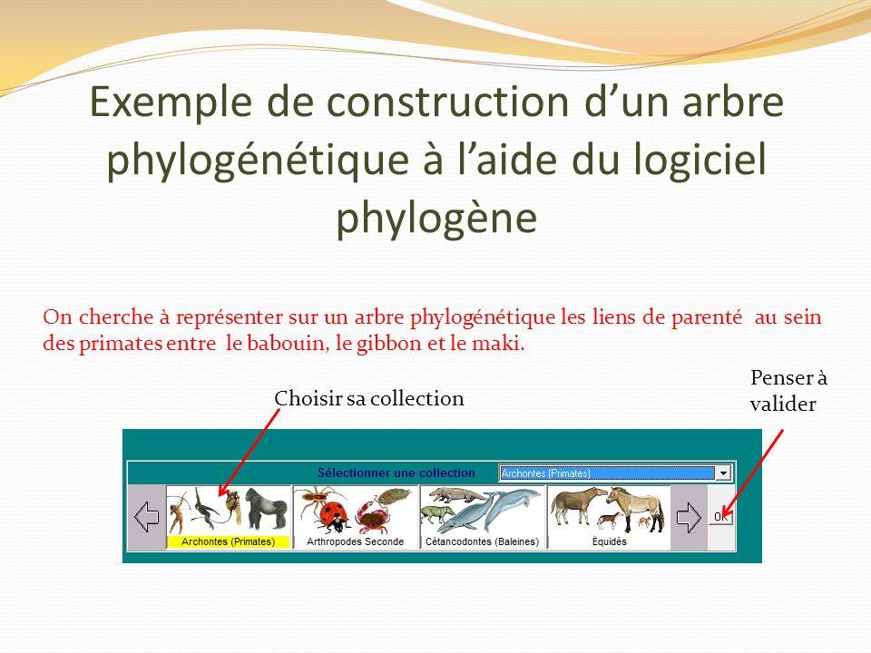 Exemple de construction d'un arbre phylogénétique à l'aide du logiciel phylogène