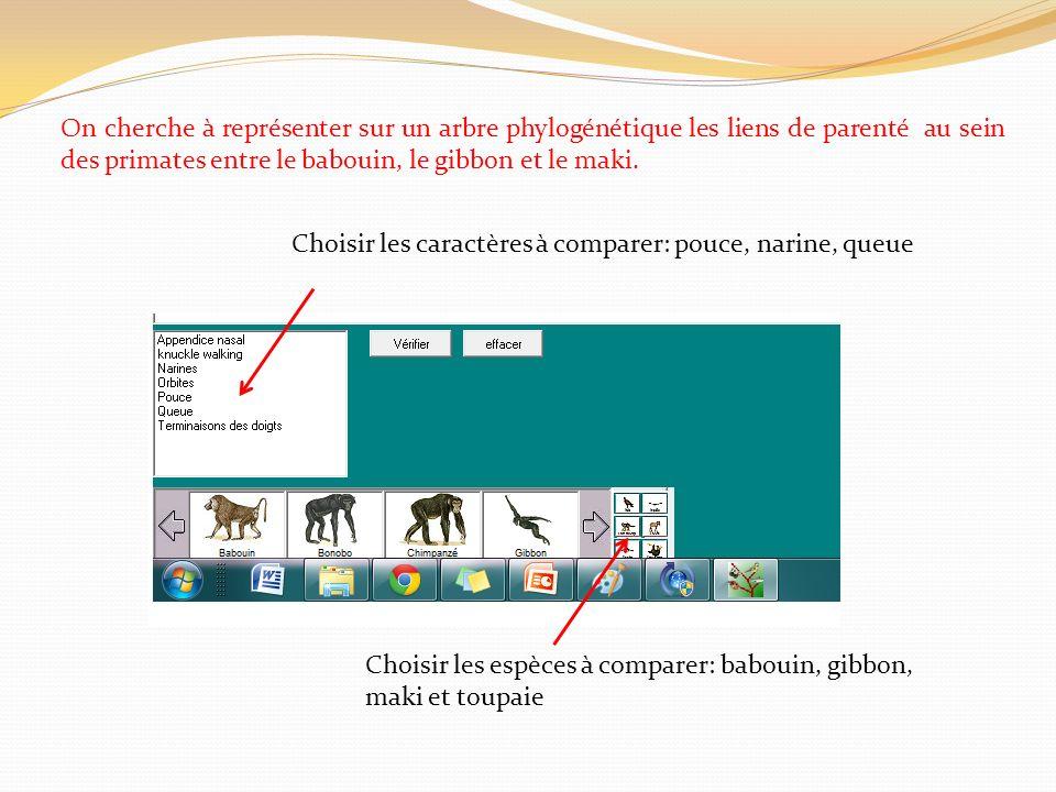 On cherche à représenter sur un arbre phylogénétique les liens de parenté au sein des primates entre le babouin, le gibbon et le maki.