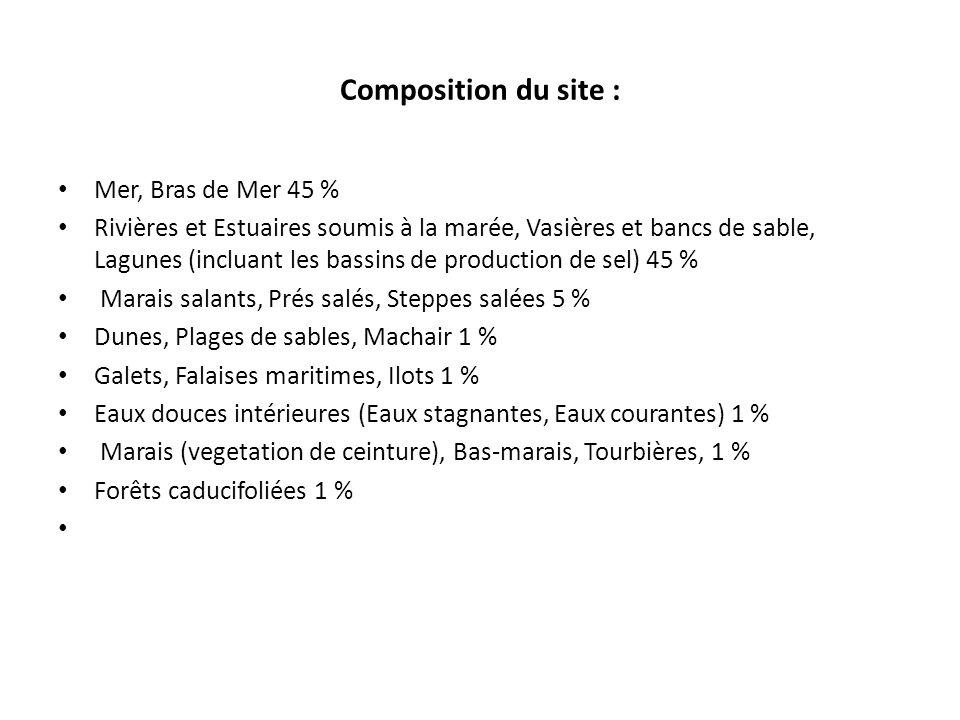 Composition du site : Mer, Bras de Mer 45 %