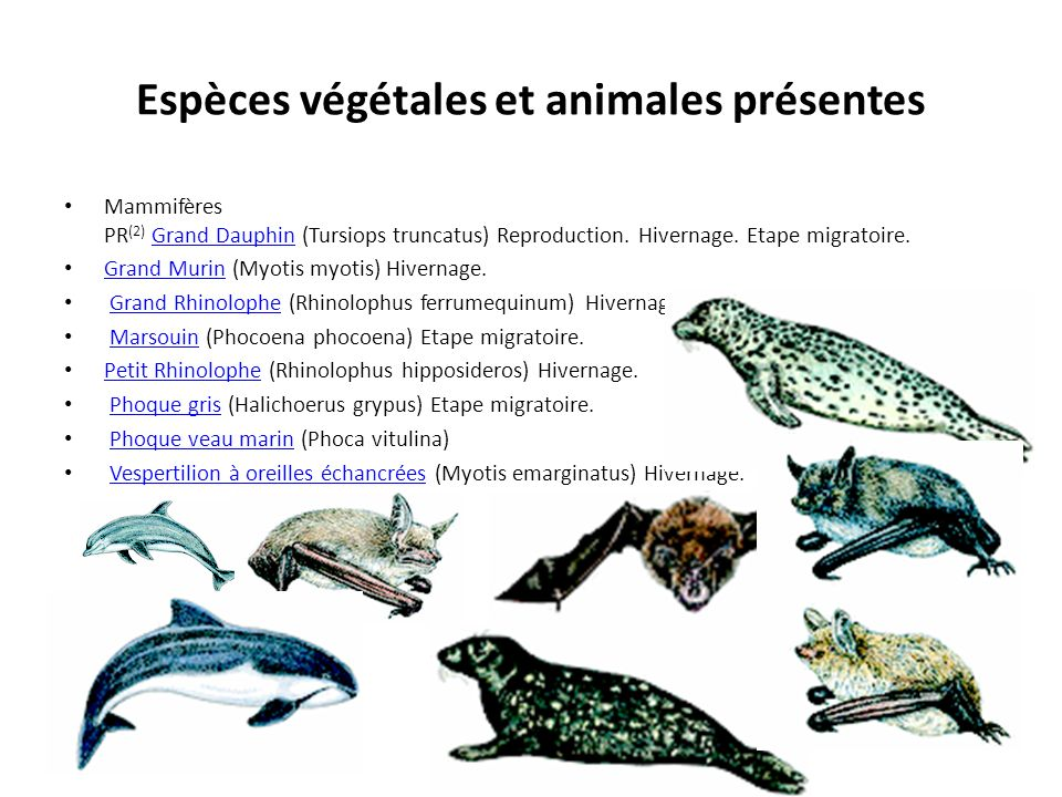 Espèces végétales et animales présentes