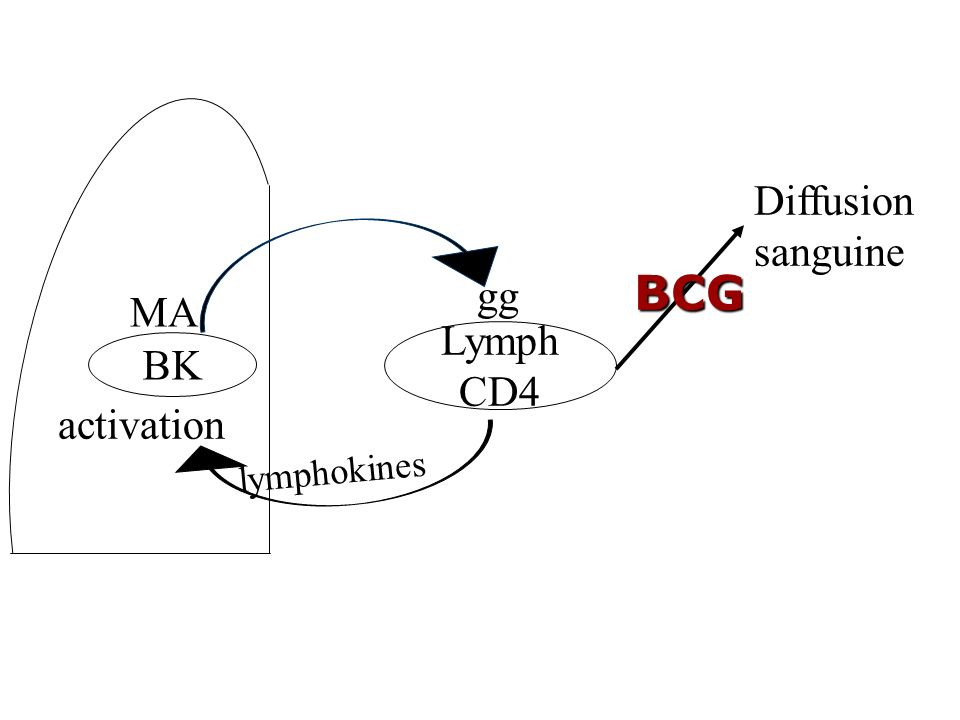 Diffusion sanguine BCG gg MA Lymph CD4 BK activation lymphokines