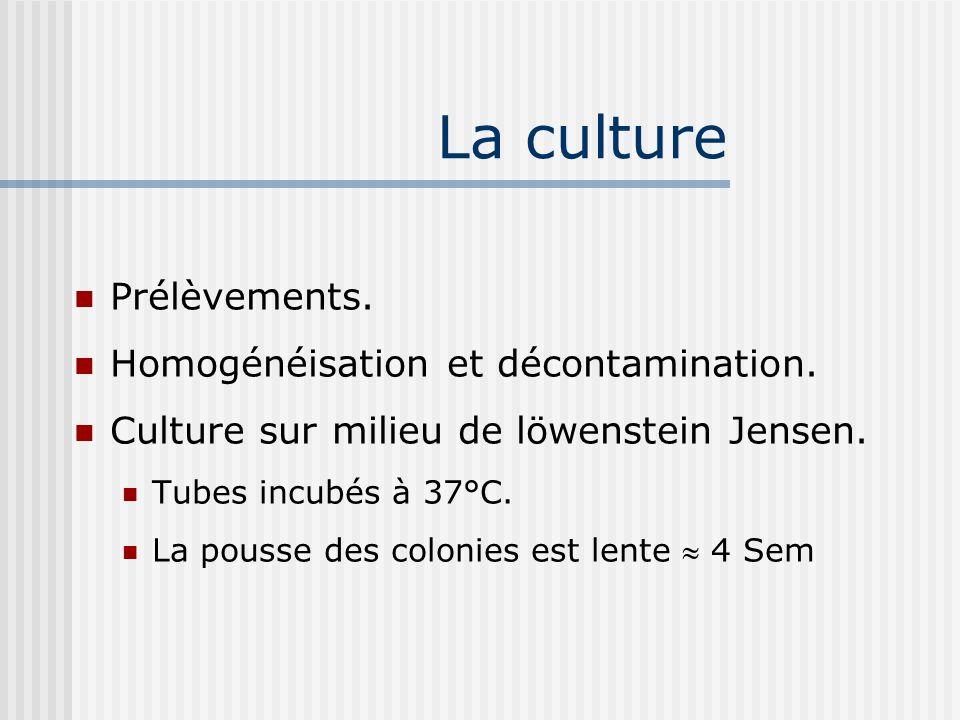 La culture Prélèvements. Homogénéisation et décontamination.