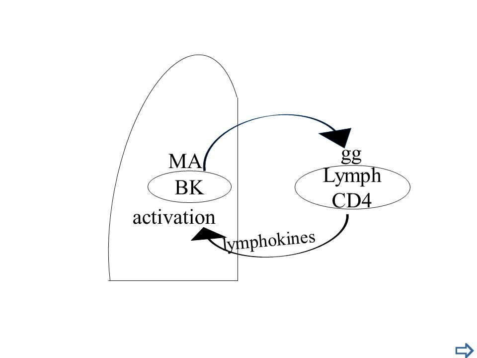 gg MA Lymph CD4 BK activation lymphokines 