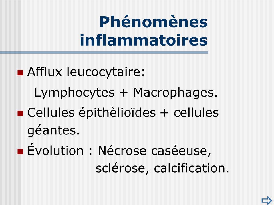 Phénomènes inflammatoires