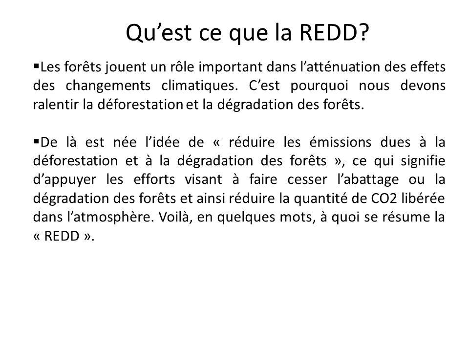Qu'est ce que la REDD
