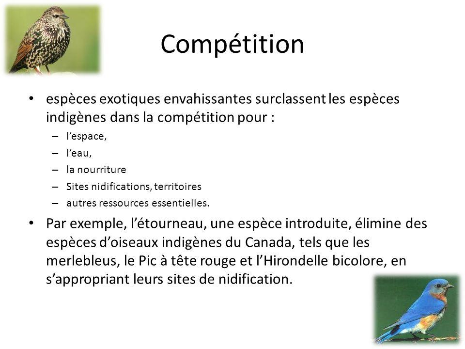 Compétition espèces exotiques envahissantes surclassent les espèces indigènes dans la compétition pour :