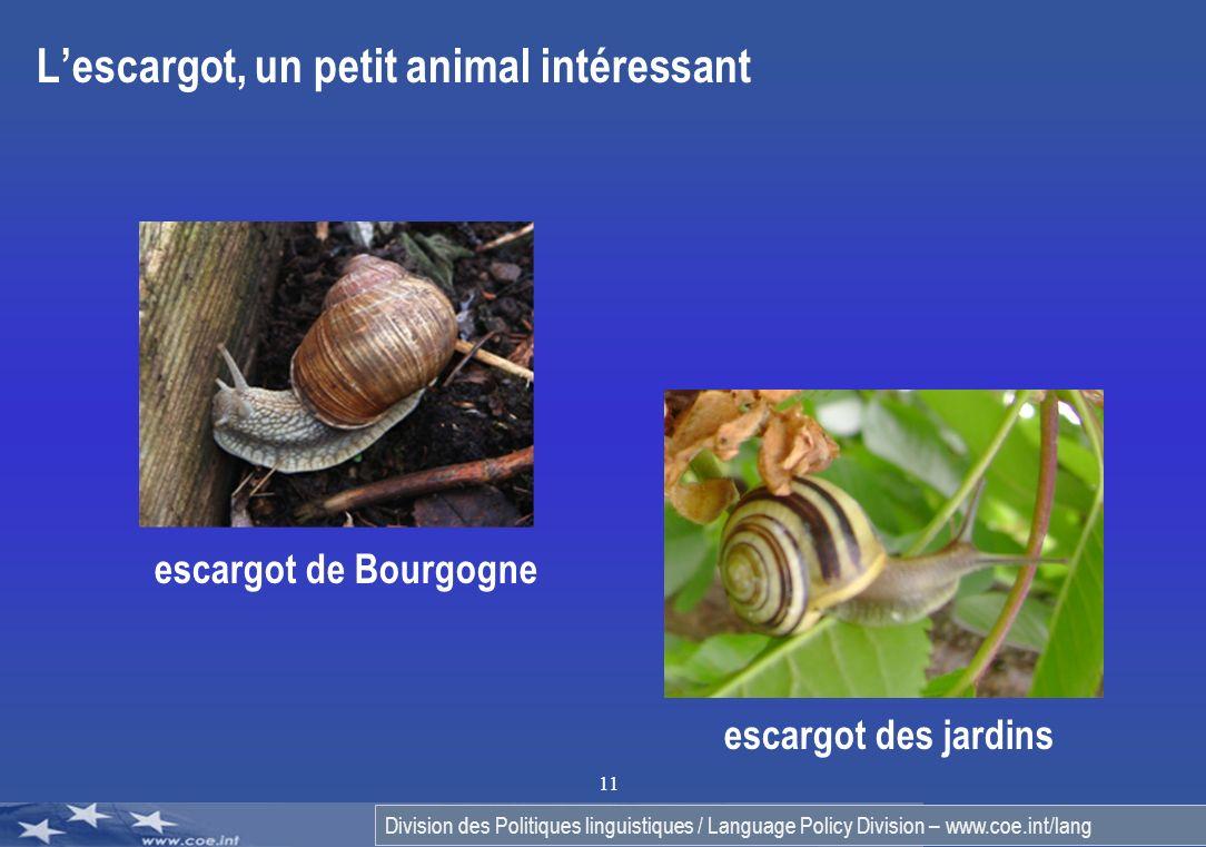 L'escargot, un petit animal intéressant
