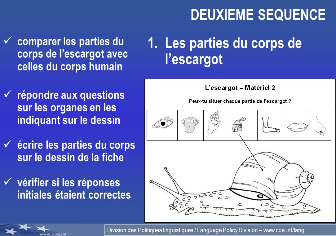 Les parties du corps de l'escargot