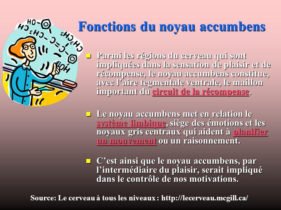 Fonctions du noyau accumbens