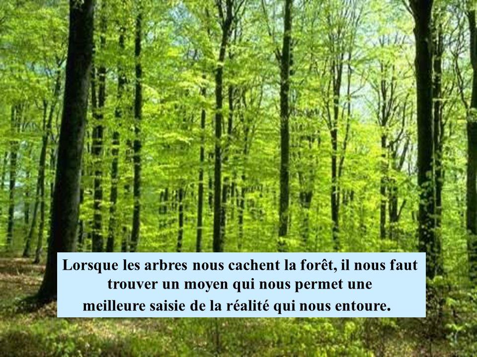 Lorsque les arbres nous cachent la forêt, il nous faut