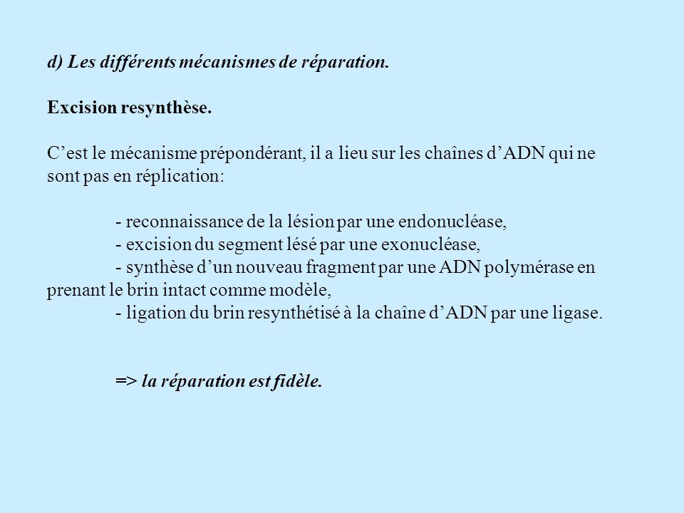 d) Les différents mécanismes de réparation.