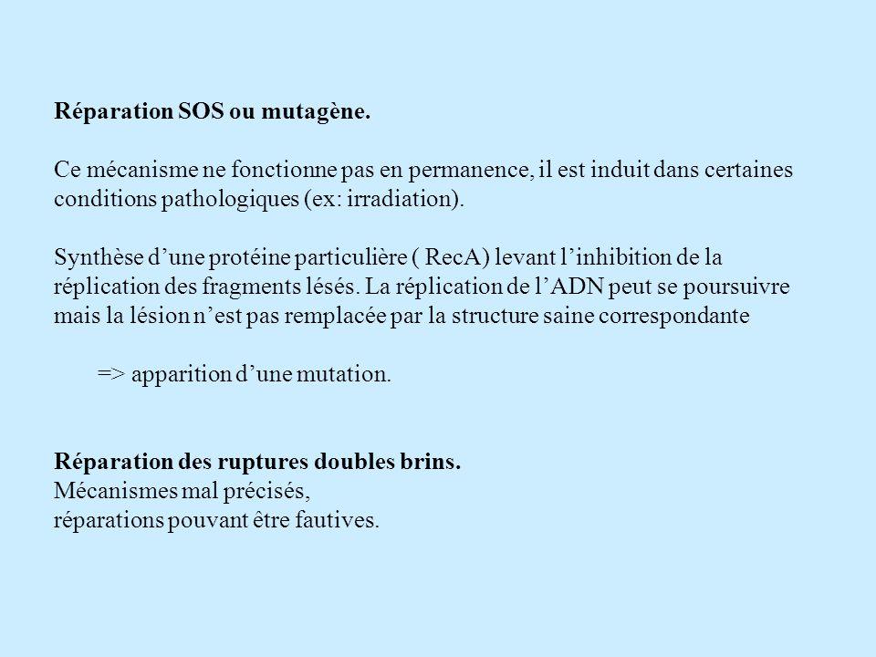 Réparation SOS ou mutagène.