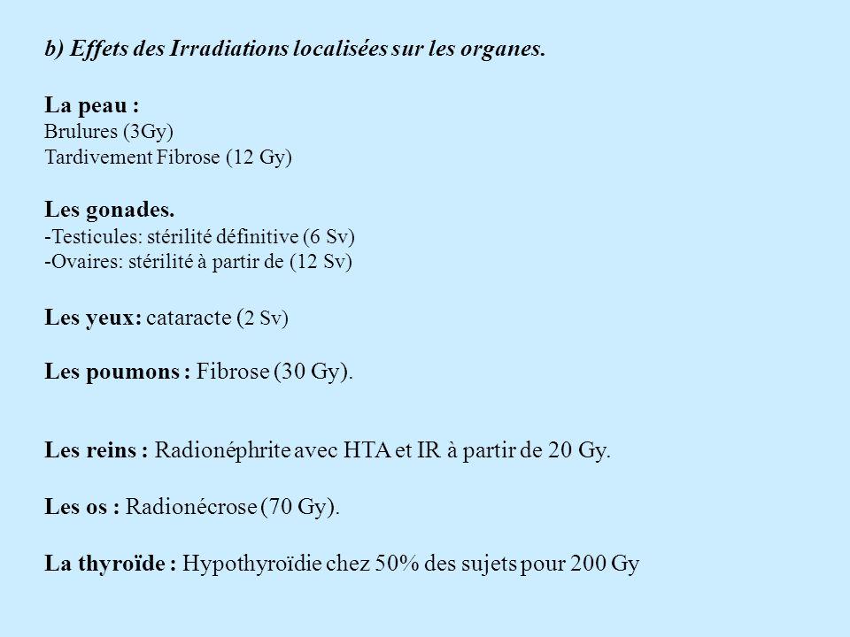 b) Effets des Irradiations localisées sur les organes. La peau :