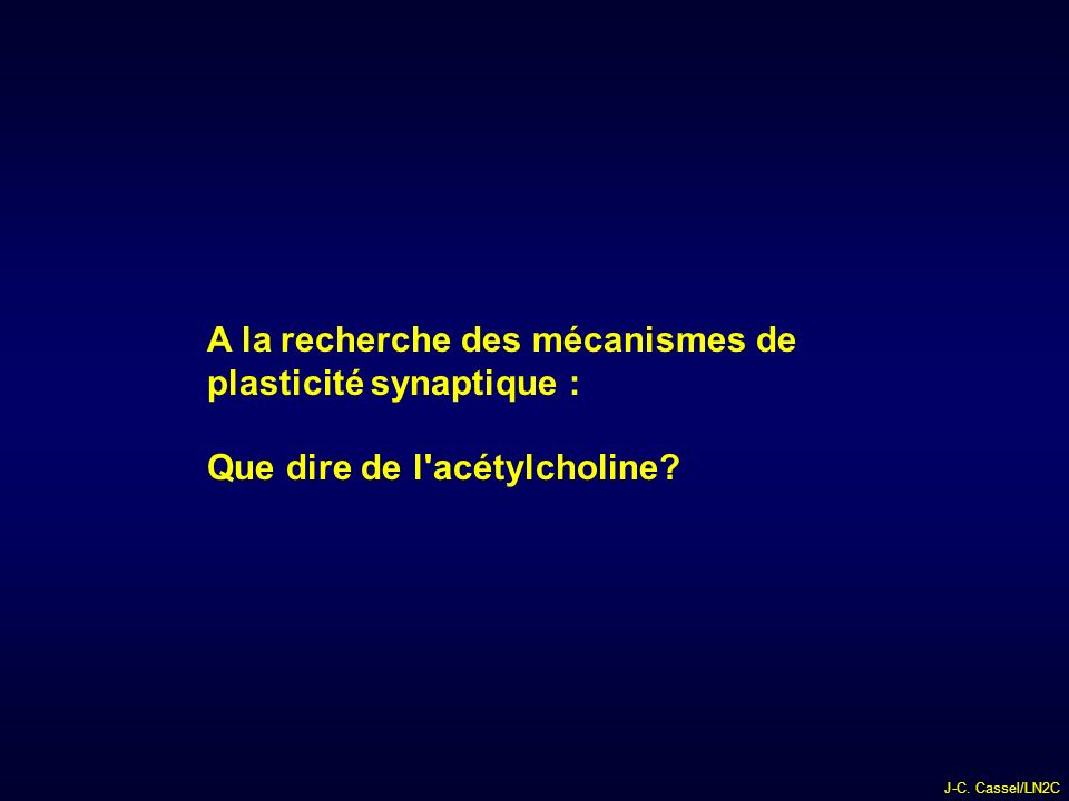 A la recherche des mécanismes de plasticité synaptique :