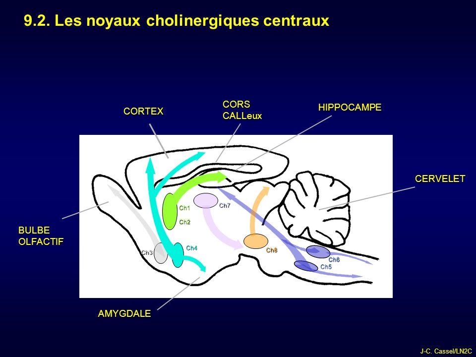 9.2. Les noyaux cholinergiques centraux
