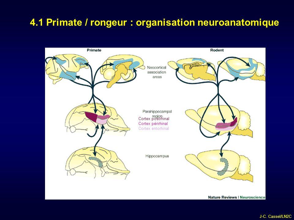 4.1 Primate / rongeur : organisation neuroanatomique