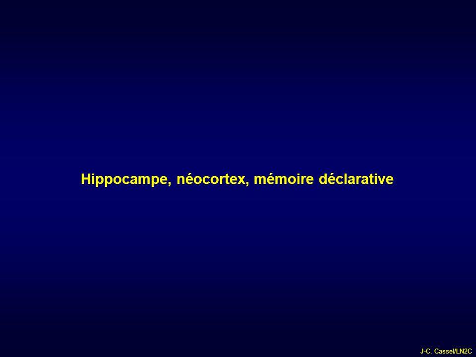 Hippocampe, néocortex, mémoire déclarative