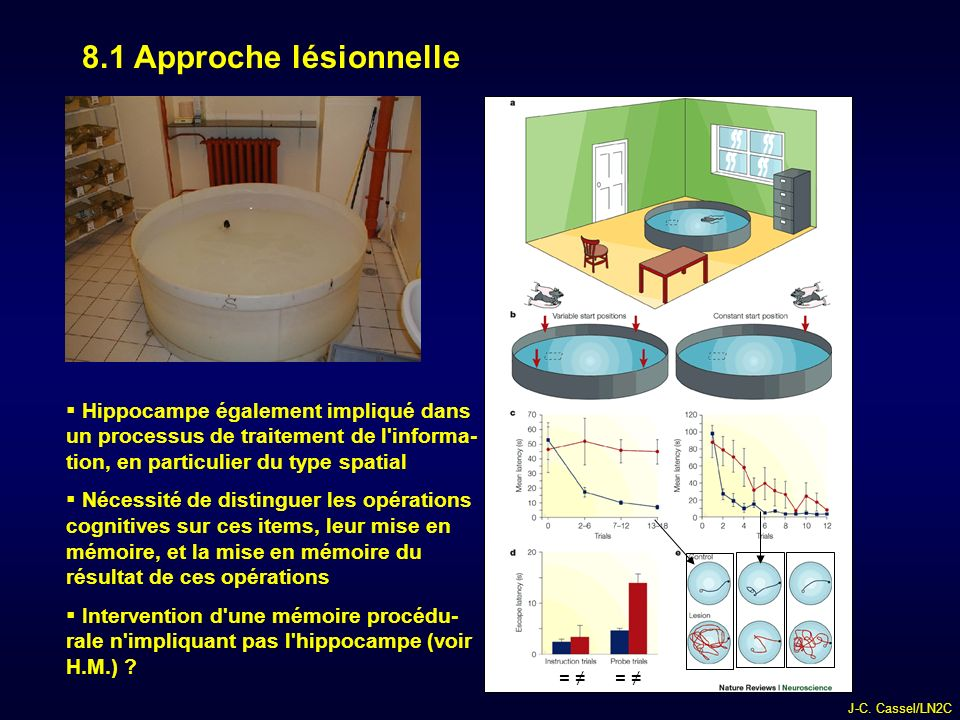 8.1 Approche lésionnelle Hippocampe également impliqué dans un processus de traitement de l informa- tion, en particulier du type spatial.