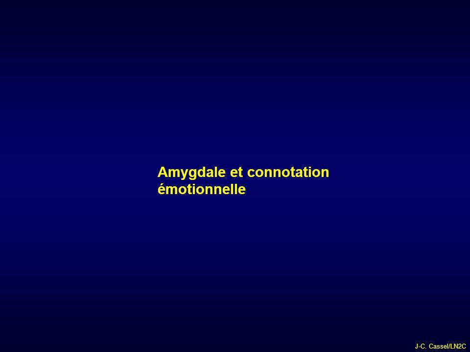Amygdale et connotation émotionnelle