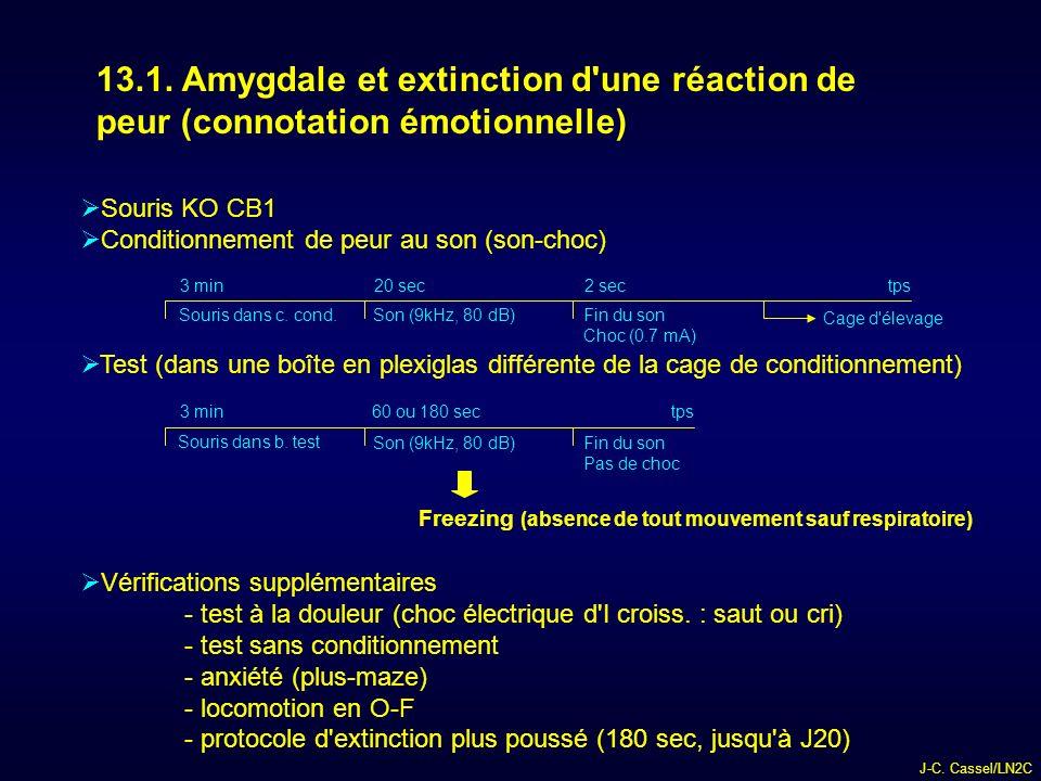 13.1. Amygdale et extinction d une réaction de peur (connotation émotionnelle)