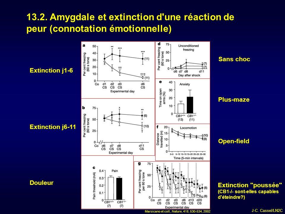 13.2. Amygdale et extinction d une réaction de peur (connotation émotionnelle)