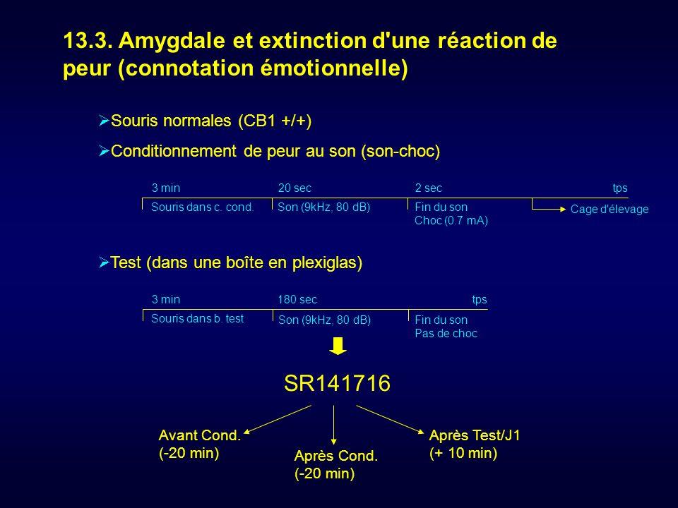 13.3. Amygdale et extinction d une réaction de peur (connotation émotionnelle)