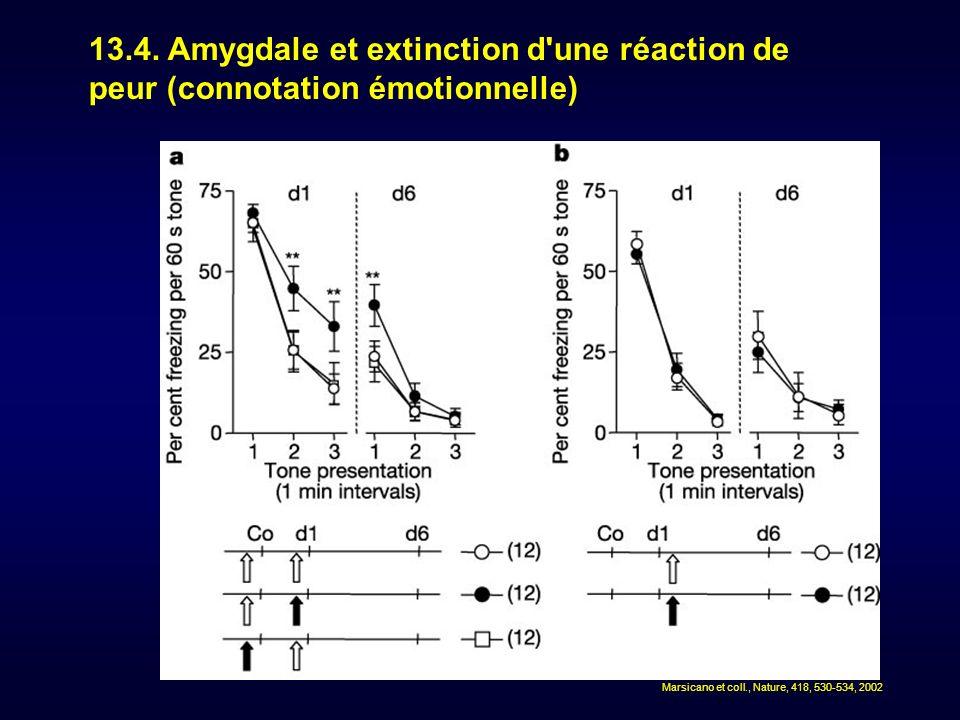 13.4. Amygdale et extinction d une réaction de peur (connotation émotionnelle)