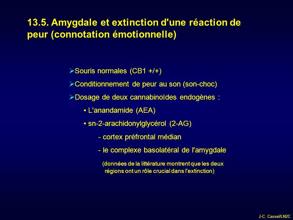 13.5. Amygdale et extinction d une réaction de peur (connotation émotionnelle)