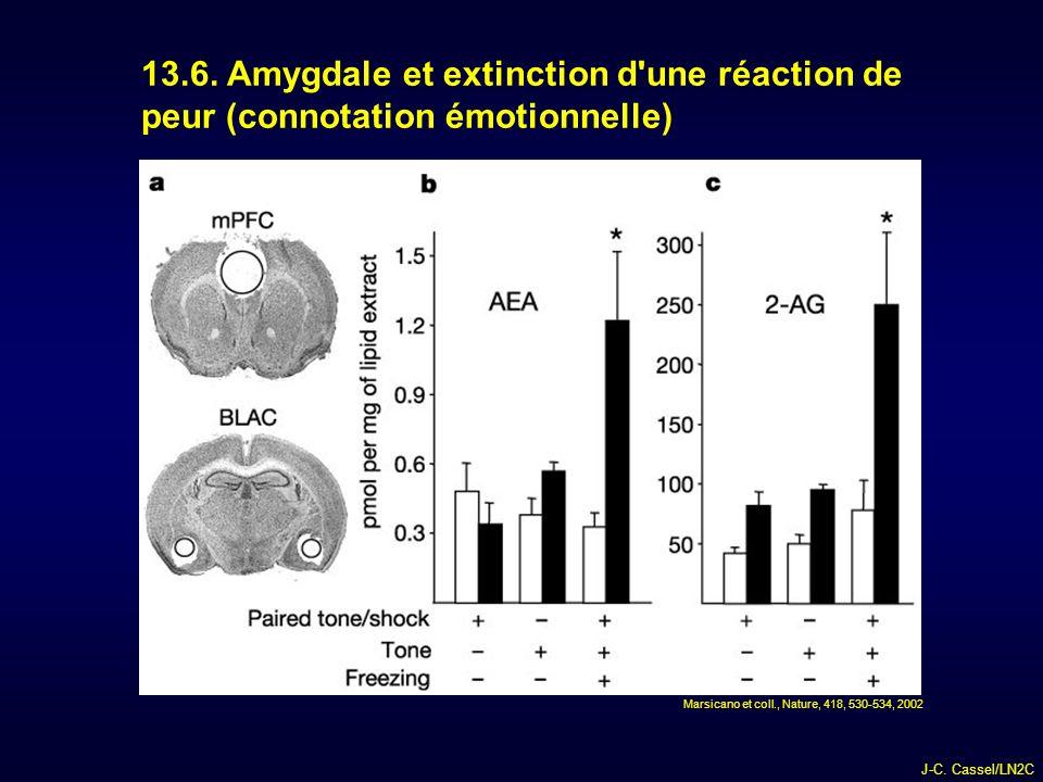13.6. Amygdale et extinction d une réaction de peur (connotation émotionnelle)
