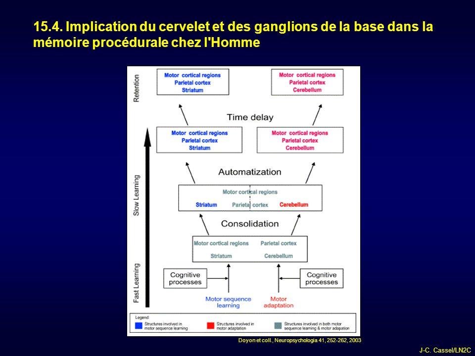 15.4. Implication du cervelet et des ganglions de la base dans la mémoire procédurale chez l Homme