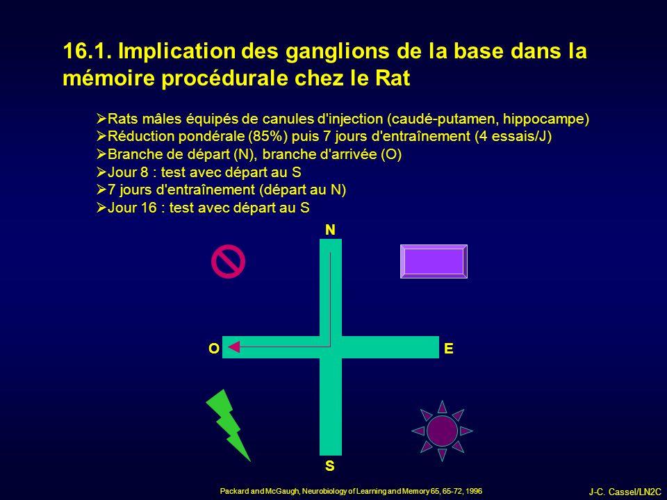 16.1. Implication des ganglions de la base dans la mémoire procédurale chez le Rat