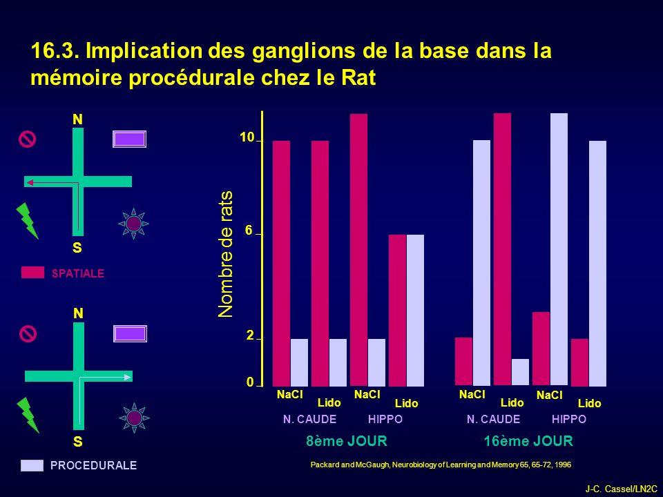 16.3. Implication des ganglions de la base dans la mémoire procédurale chez le Rat