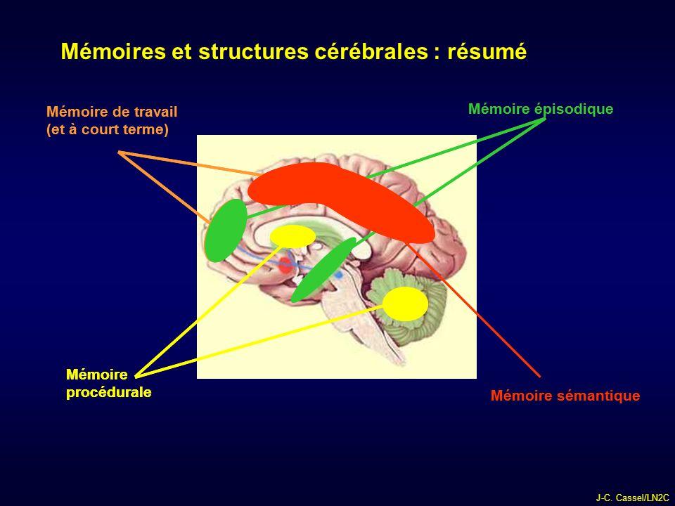 diu nancy-strasbourg anatomie fonctionnelle de la m u00e9moire