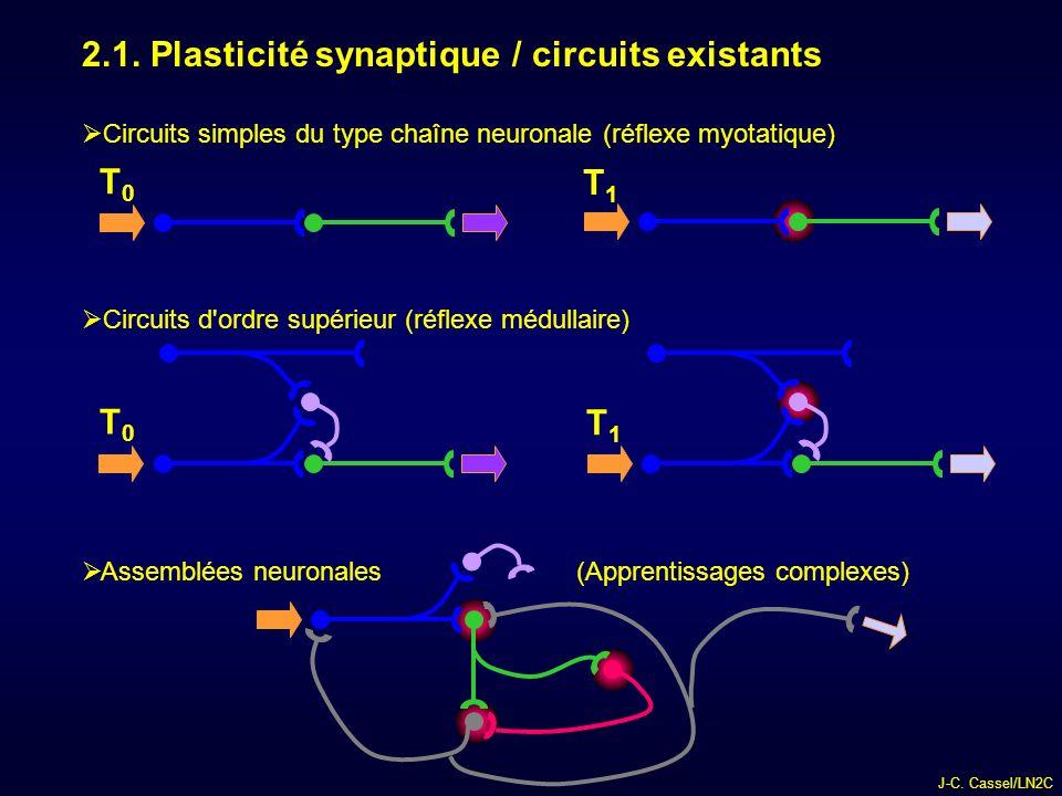 2.1. Plasticité synaptique / circuits existants