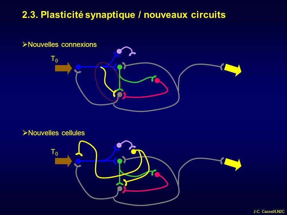 2.3. Plasticité synaptique / nouveaux circuits