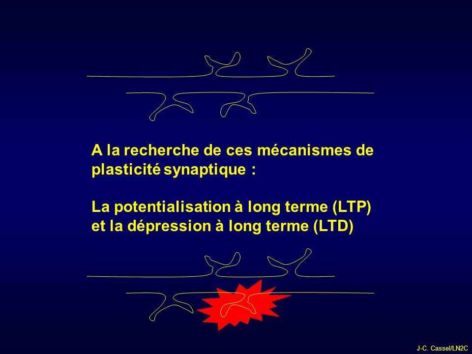 A la recherche de ces mécanismes de plasticité synaptique :