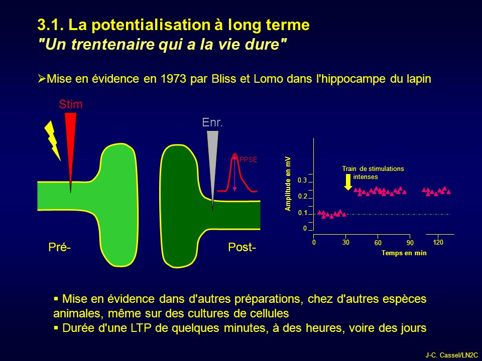 3.1. La potentialisation à long terme