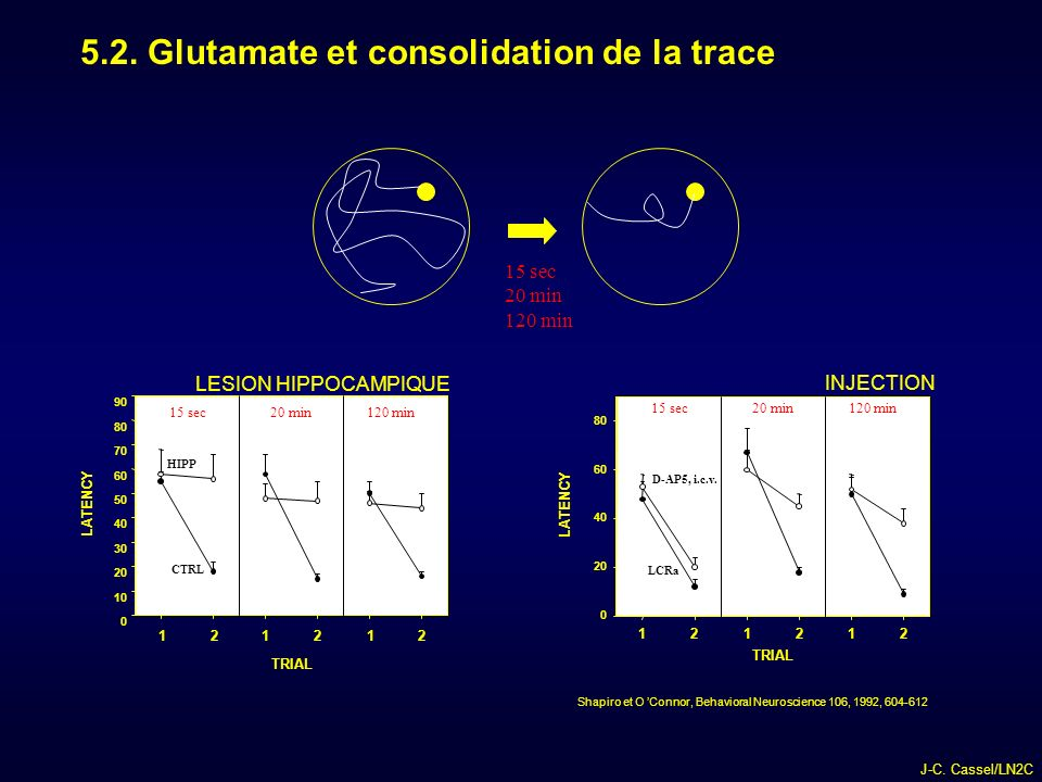 5.2. Glutamate et consolidation de la trace