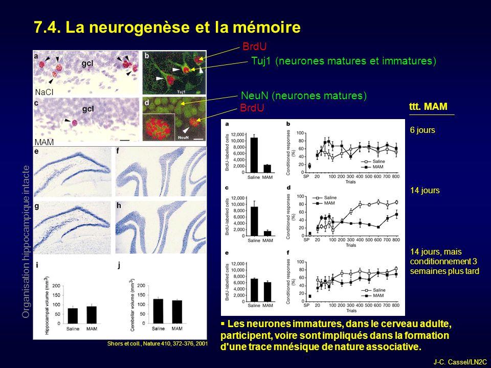 7.4. La neurogenèse et la mémoire