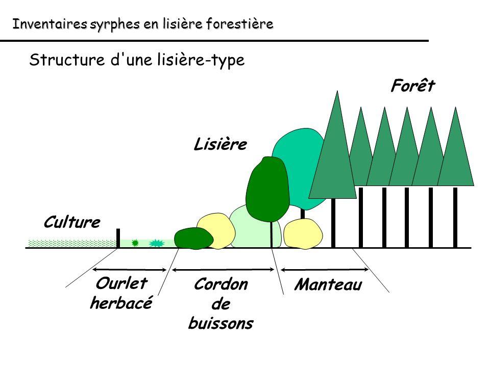 Ourlet herbacé Cordon de buissons Manteau