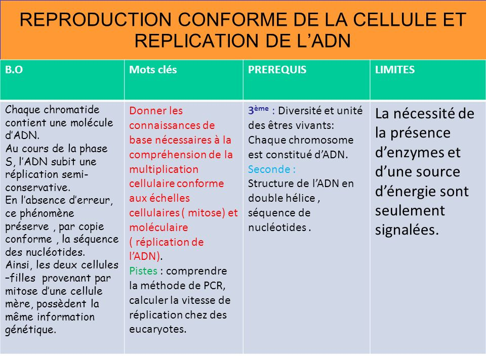 REPRODUCTION CONFORME DE LA CELLULE ET REPLICATION DE L'ADN