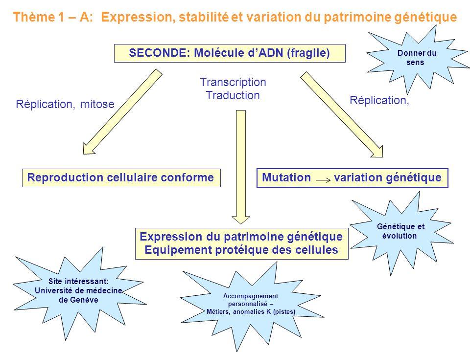 Thème 1 – A: Expression, stabilité et variation du patrimoine génétique