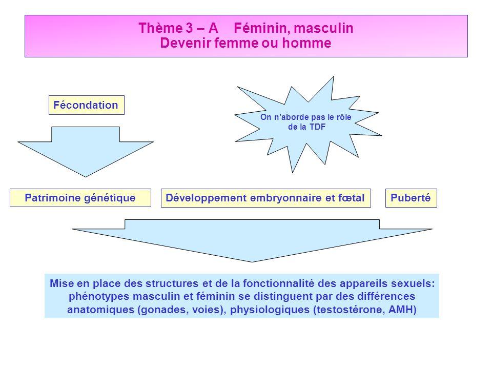 Thème 3 – A Féminin, masculin Devenir femme ou homme