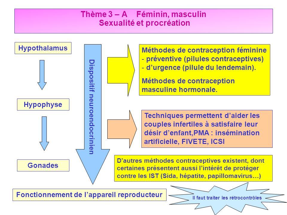 Thème 3 – A Féminin, masculin Sexualité et procréation