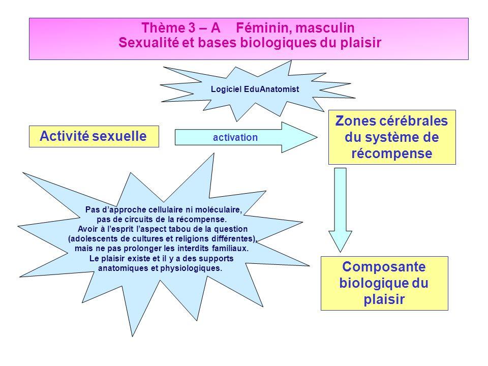 Zones cérébrales du système de récompense Activité sexuelle