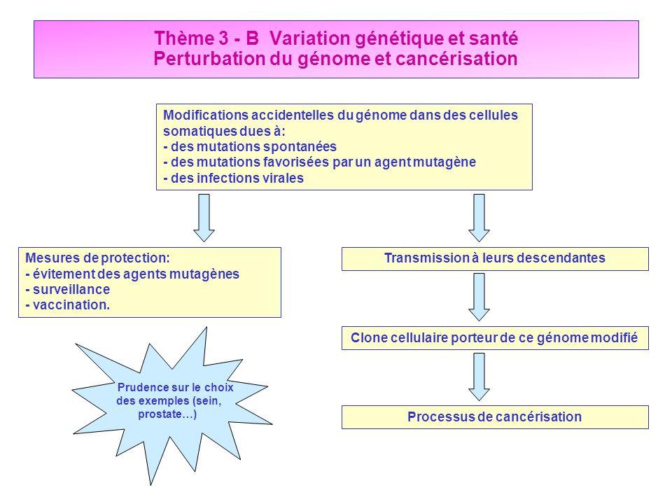 Thème 3 - B Variation génétique et santé Perturbation du génome et cancérisation