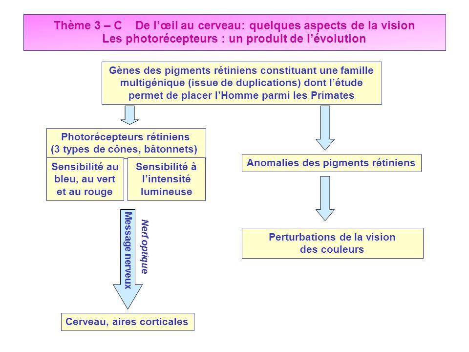 Thème 3 – C De l'œil au cerveau: quelques aspects de la vision Les photorécepteurs : un produit de l'évolution