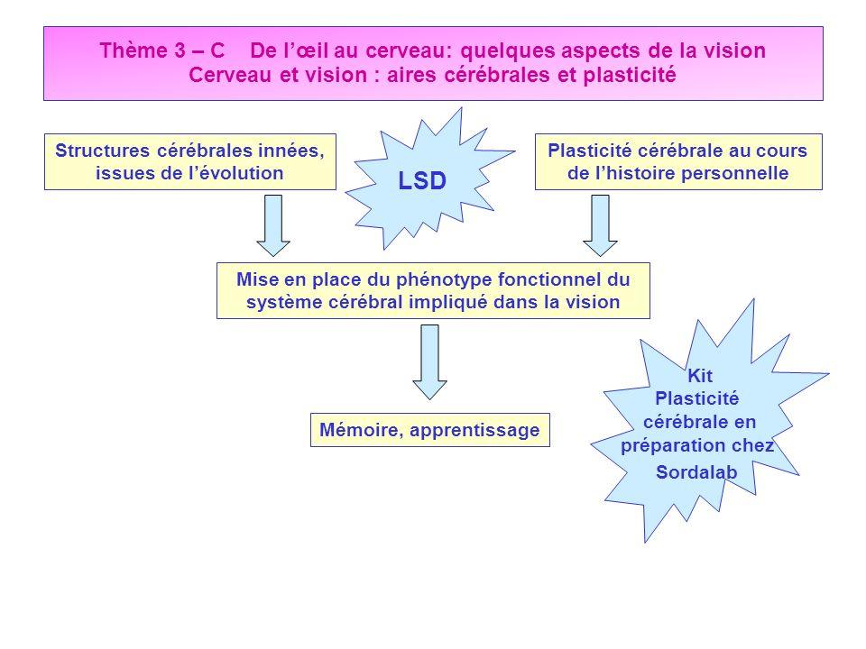 Thème 3 – C De l'œil au cerveau: quelques aspects de la vision Cerveau et vision : aires cérébrales et plasticité